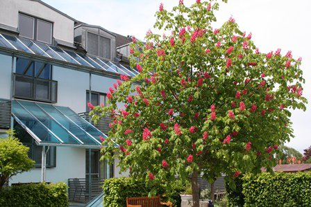 Landhotel - Gasthof Drexler, Bild 26